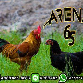 Aplikasi Sabung Ayam S128
