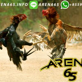 Situs Taruhan Judi Ayam S128
