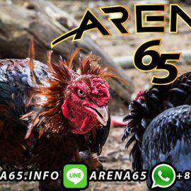 Situs Daftar S128 Adu Ayam Online
