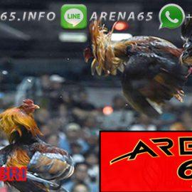 Bandar Sabung Ayam Online Bonus 100% 8 x Win