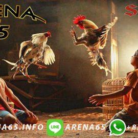 Link 24 Jam Sabung Ayam Online S1288 Terpopuler