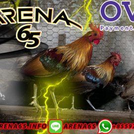 Situs Bandar Agen Sabung Ayam Online Terbesar