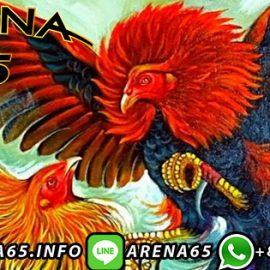 Agen Judi Sabung Ayam Online Deposit Via Ovo