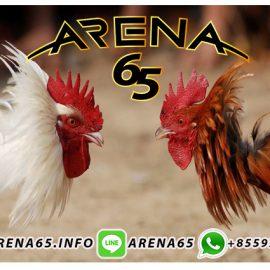 Sabung Ayam Online Deposit Bank Mandiri 24Jam